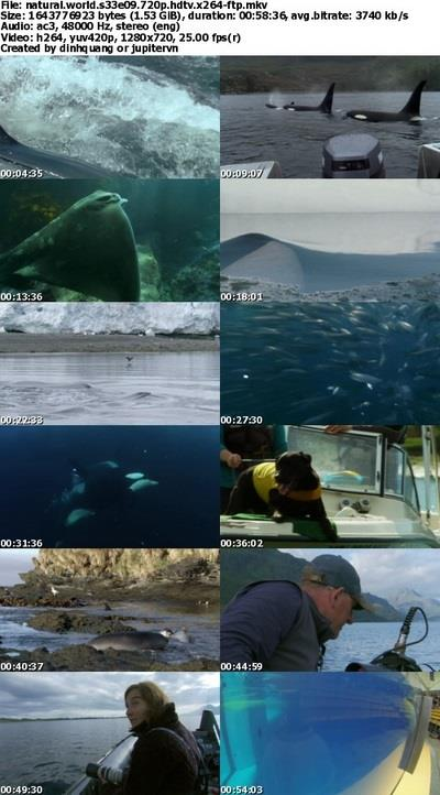 BBC - Natural World S33E09 Killer Whales: Beneath the Surface (2013) 720p HDTV x264-FTP