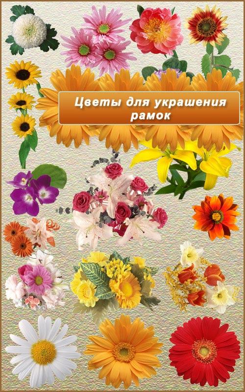 Цветы для украшения рамок - Клипарт PNG