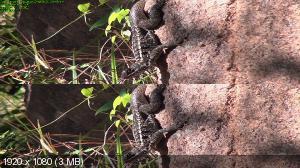 Мадагаскар 3D / Madagascar 3D  Вертикальная анаморфная