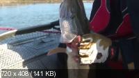 В погоне за мордатой щукой (2013) WEB-DLRip