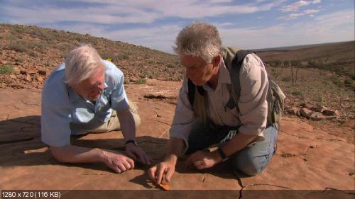 Истоки жизни / Первая жизнь / David Attenborough's First Life (2010) 720p BDRip