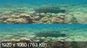 Хищники океанов 3D / Ocean Predators 3D (2013/BDRip/HDRip/3D)
