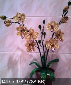 Мои цветочки из бисера 98dd170a3f4a0f4d3475a507ba8299bc