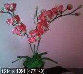 Мои цветочки из бисера 8fc43556418ccab73718b3d20cc507e9