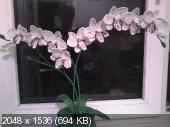 Мои цветочки из бисера 0275f7fe22ed96e3aa9618ae3569fcfd