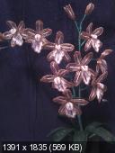 Мои цветочки из бисера 0392de71fa28443f00901ef067743ead