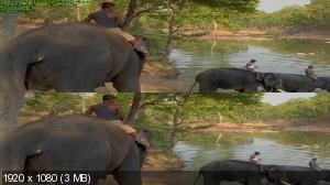 Индия 3D / Indien 3D / India 3D (by Ash61) Вертикальная анаморфная стереопара