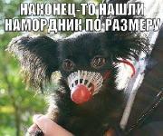 Фотоподборка '220V' 20.02.15