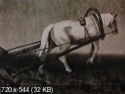Поле (1978) VHSRip