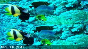 ������� ������ � 3� / Ocean Giants 3D (Sam Weaver)  ( by Ash61) ������������ ����������