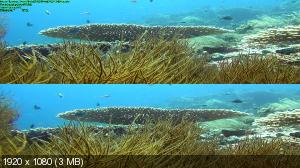 Гиганты океана в 3Д / Ocean Giants 3D (Sam Weaver)  ( by Ash61) Вертикальная анаморфная
