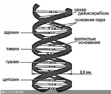 http://i60.fastpic.ru/thumb/2015/0322/9c/16570f5f406904e4c8f98bd6267b2a9c.jpeg