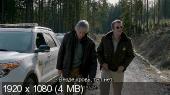 ������ / Grizzly (2014) BDRemux 1080p | VO
