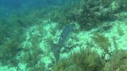 Багамские острова: Таинственные пещеры и затонувшие корабли (2012) BDRip 720p от NNNB
