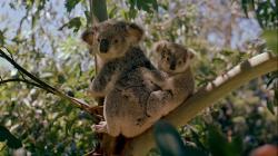 Австралия: Земля вне времени (2002) BDRip AVC